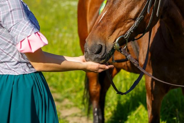 Mulher alimenta um cavalo com animal favorito de mãos