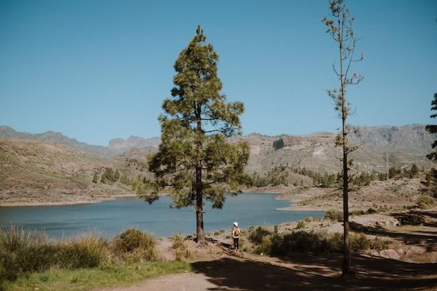 Mulher alpinista ao lado de um pinheiro com vista para um belo lago em um dia ensolarado