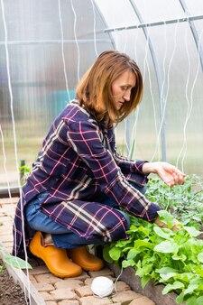 Mulher amarrando tomates com cordas