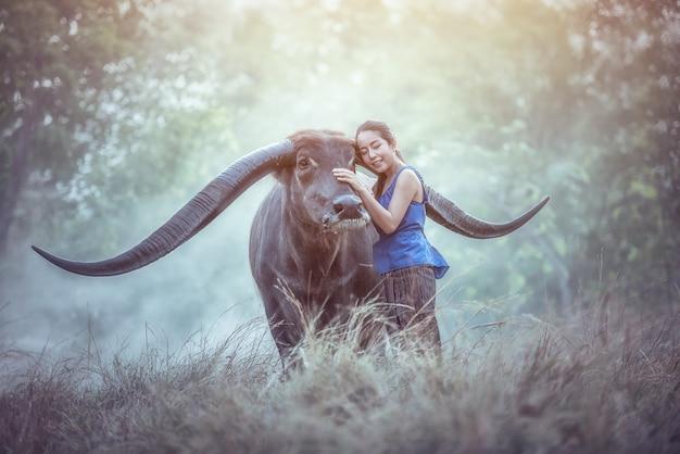 Mulher asiática bonita que veste vestidos tradicionais locais tailandeses com o búfalo longo do chifre.
