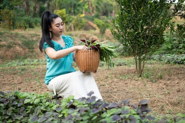 Mulher asiática com uma cesta com vegetais de espinafre recém-colhidos em jardins a
