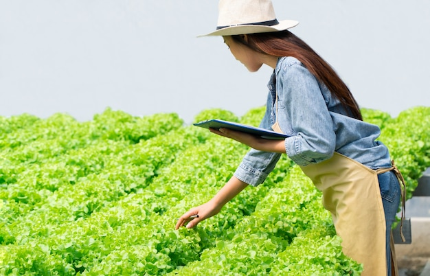 Mulher asiática do fazendeiro que guarda a prancheta e a salada do vegetal cru para verificar a qualidade no sistema hidropônico da exploração agrícola na estufa.