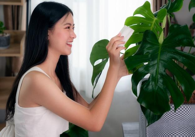 Mulher asiática limpa folhas de uma monstera em seu condomínio, esta imagem pode ser usada para o conceito de planta, hobby, casa e decoração