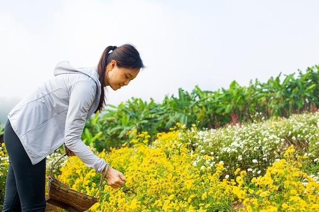 Mulher asiática seleciona flores no jardim