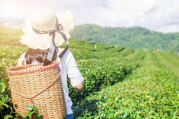 Mulher asiática viajante segurando cesta para na fazenda de chá verde de manhã