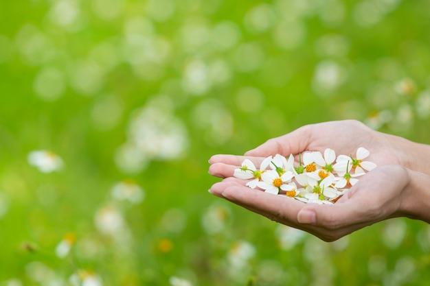 Mulher bonita com um vestido branco bonito, de pé e brincando em um pasto com flores brancas