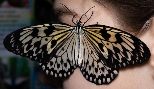 Mulher bonita com uma borboleta no cabelo.