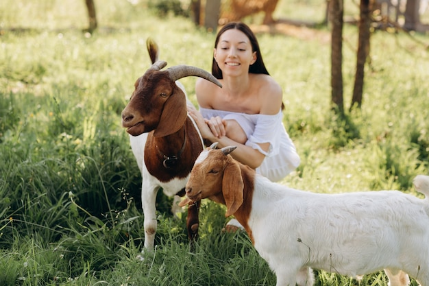 Mulher bonita em um vestido branco alimenta cabras e seus filhos verdes em uma fazenda ecológica.
