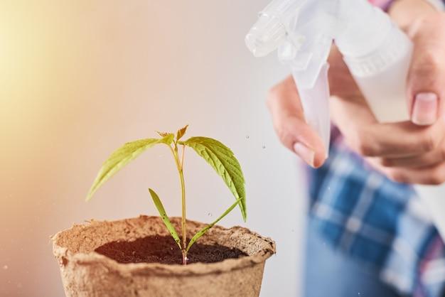 Mulher borrifando água na planta em um vaso