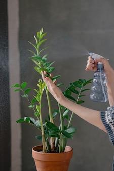 Mulher branca regando e hidratando flores em casa cuidados com plantas regando e transplantando flores
