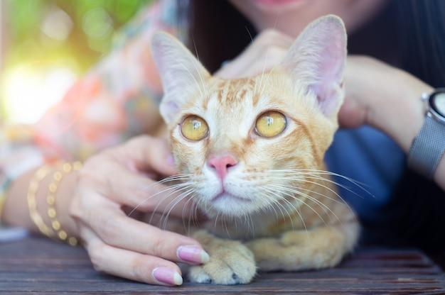 Mulher brincando com um gato