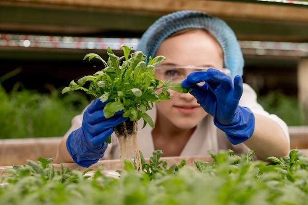 Mulher caucasiana comenta sobre o cultivo de rúcula orgânica em uma fazenda de hidroponia.