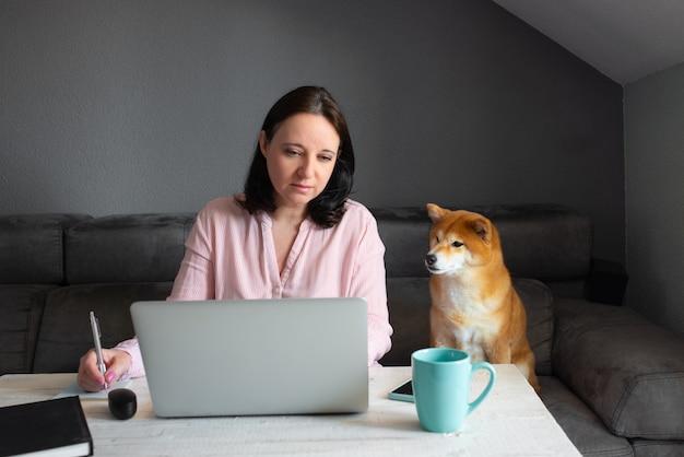 Mulher caucasiana em uma blusa rosa, trabalhando em sua própria casa. ela está sentada em um sofá cinza enquanto observa seu cachorro shiba inu que está sentado com ela