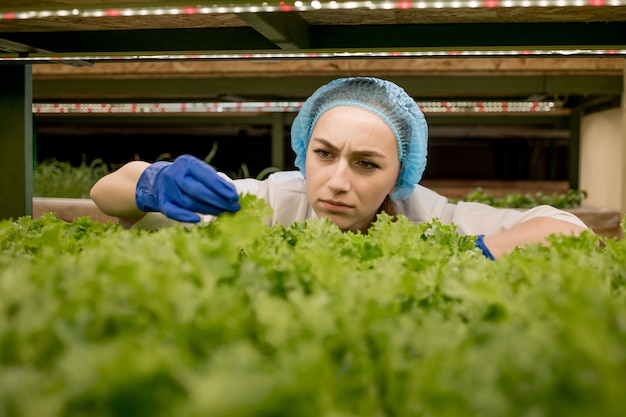 Mulher caucasiana observa sobre cultivo de salada orgânica em fazenda de hidroponia