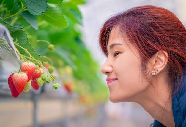 Mulher cheirando morango em uma fazenda hidropônica de morango