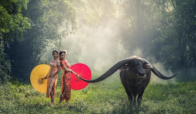 Mulher chinesa vestido cheongsam tradicional com búfalo