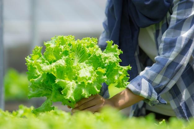 Mulher, colheita, vegetal