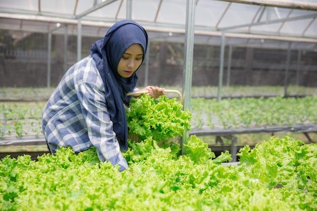 Mulher colhendo da fazenda hidrofônica