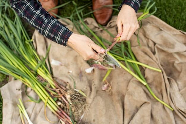 Mulher colhendo legumes