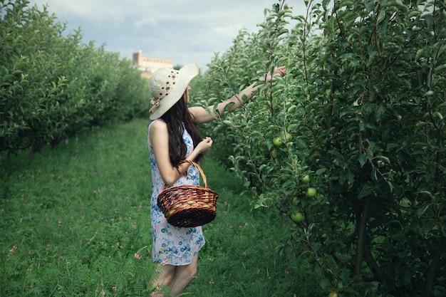 Mulher colhendo maçãs com cesta no jardim