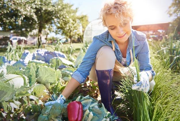 Mulher colhendo vegetais do campo