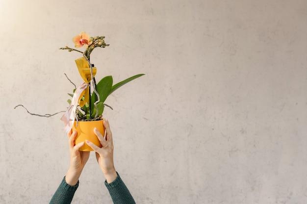 Mulher colhida com as mãos segurando uma orquídea amarela em um vaso.