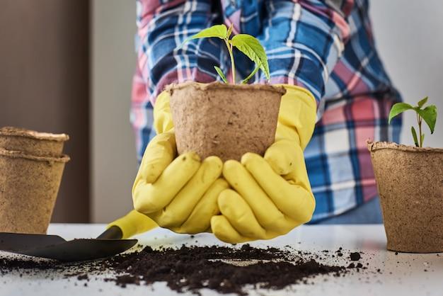 Mulher com as mãos em luvas amarelas, transplantando uma planta