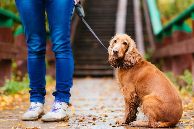 Mulher com cachorro andando no parque outono
