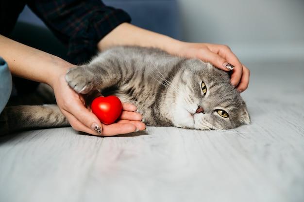 Mulher, com, coração decorativo, petting, gato