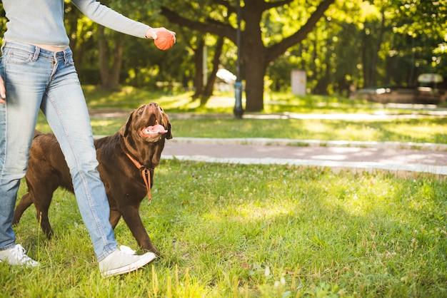 Mulher, com, dela, cão, andar, em, jardim