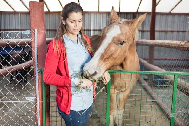 Mulher concentrada que alimenta o cavalo