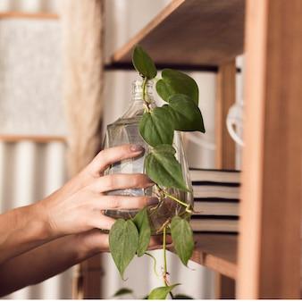 Mulher cuidando da planta em jarra