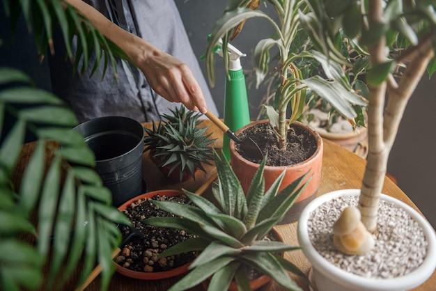 Mulher cuidando das plantas da casa