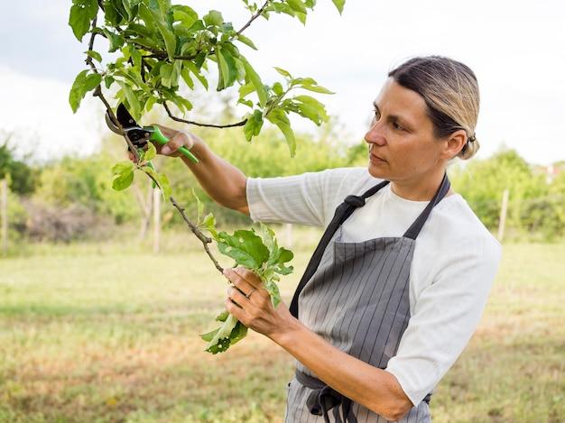 Mulher cuidando de uma árvore