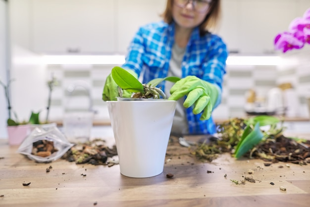 Mulher cuidando de uma planta de orquídea phalaenopsis, cortando raízes, mudando de solo, espaço interior de cozinha