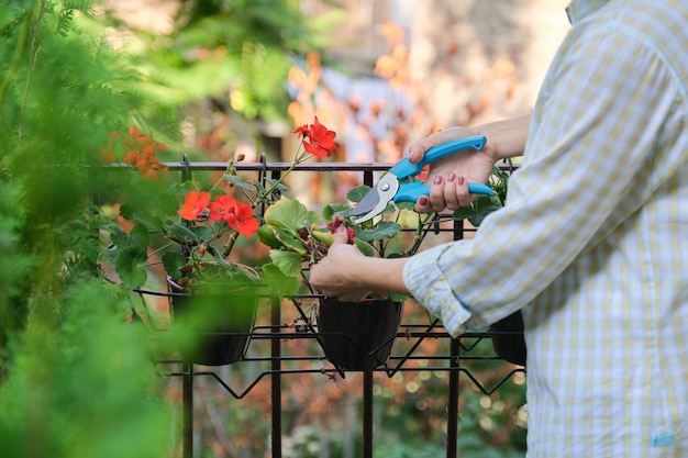 Mulher cuidando de vasos de plantas em casa. fêmea com tesouras de podar perto de flores, copie o espaço