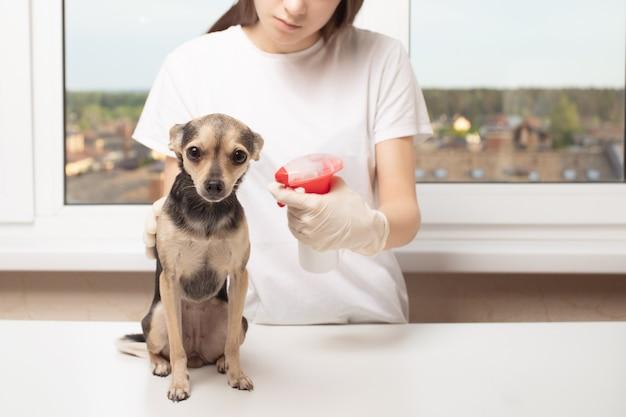 Mulher dando tratamento contra insetos para cachorro