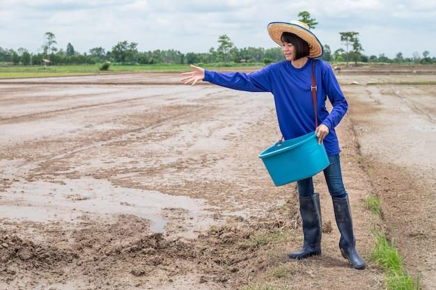 Mulher de fazendeiro asiático semeando mudas em um campo de arroz.