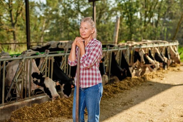 Mulher de fazendeiro está trabalhando na fazenda com vacas leiteiras.