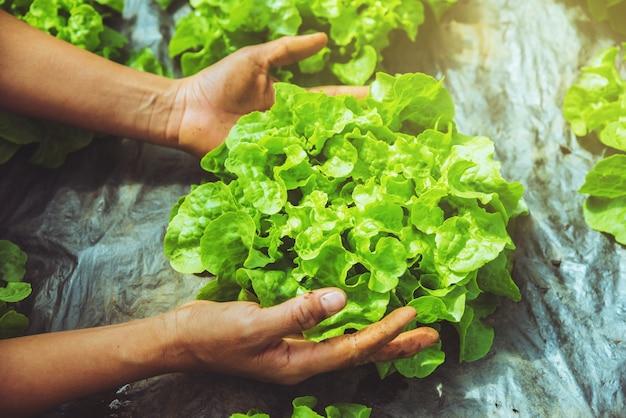 Mulher de jardineiro de mão asiática. cuidar de alface vegetal no jardim do viveiro.