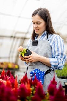 Mulher de jardineiro feliz sorrindo tocando flores de plantas cultivadas em uma caixa com emoção positiva