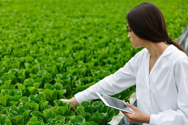 Mulher de manto de laboratório branco examina salada e repolho em uma estufa usando um tablet