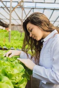 Mulher do engenheiro verificando plantas de alface em uma fazenda hidropônica.