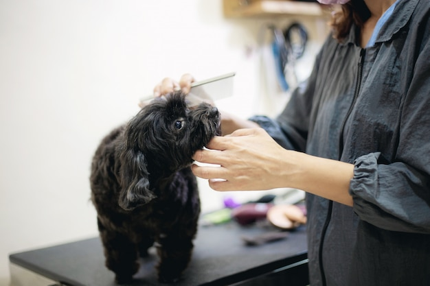 Mulher e cão na loja do animal de estimação.