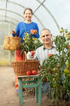 Mulher e homem em planta de tomate