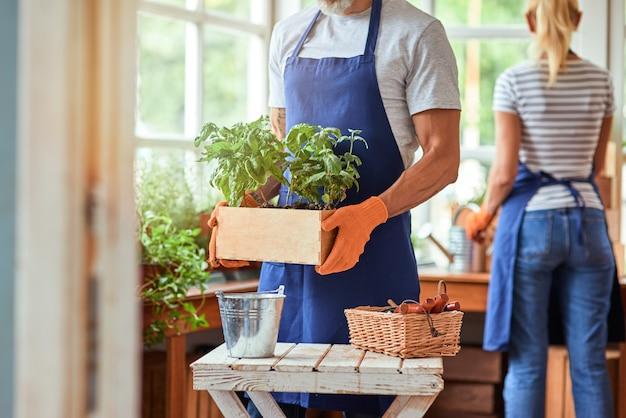 Mulher e homem trabalhando com ervas picantes em estufa