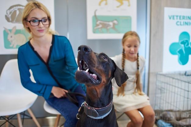 Mulher e menina esperando no veterinário com seu cachorro doberman