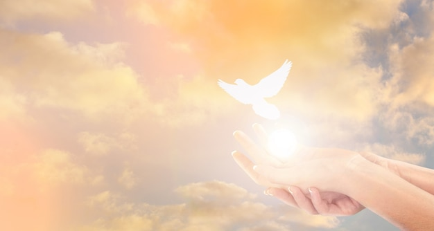 Mulher e pássaro livre no fundo do céu