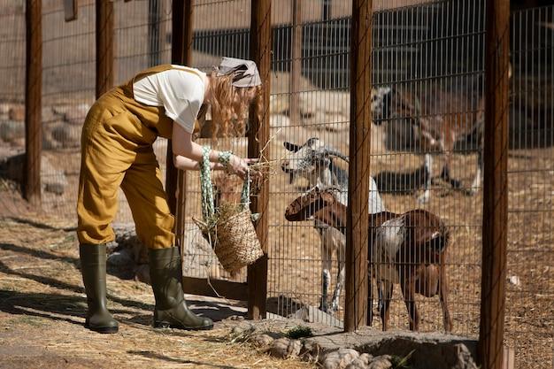 Mulher em cena completa alimentando cabras