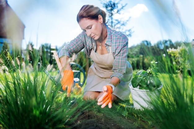 Mulher em luvas. mulher madura atraente usando luvas laranja e avental bege, arrancando ervas daninhas no jardim